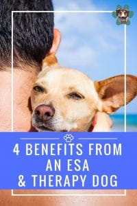 4 Benefits From an ESA & Therapy Dog