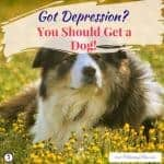Got Depression Get a Dog